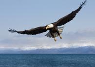 Soaring with eagles - Jim Clemmer