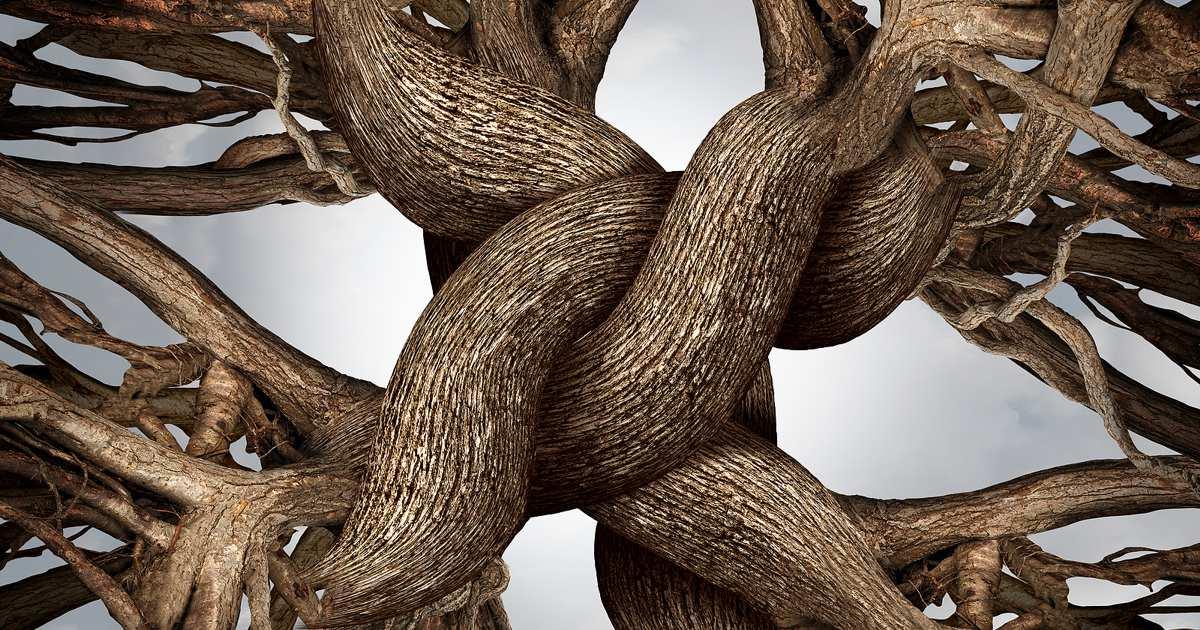 leadership team dynamics and cultre development
