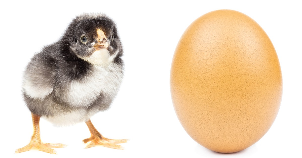 Chicken or Egg: Communication, Coaching, Culture Change, or Leading Change
